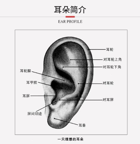 自体肋软骨造耳术