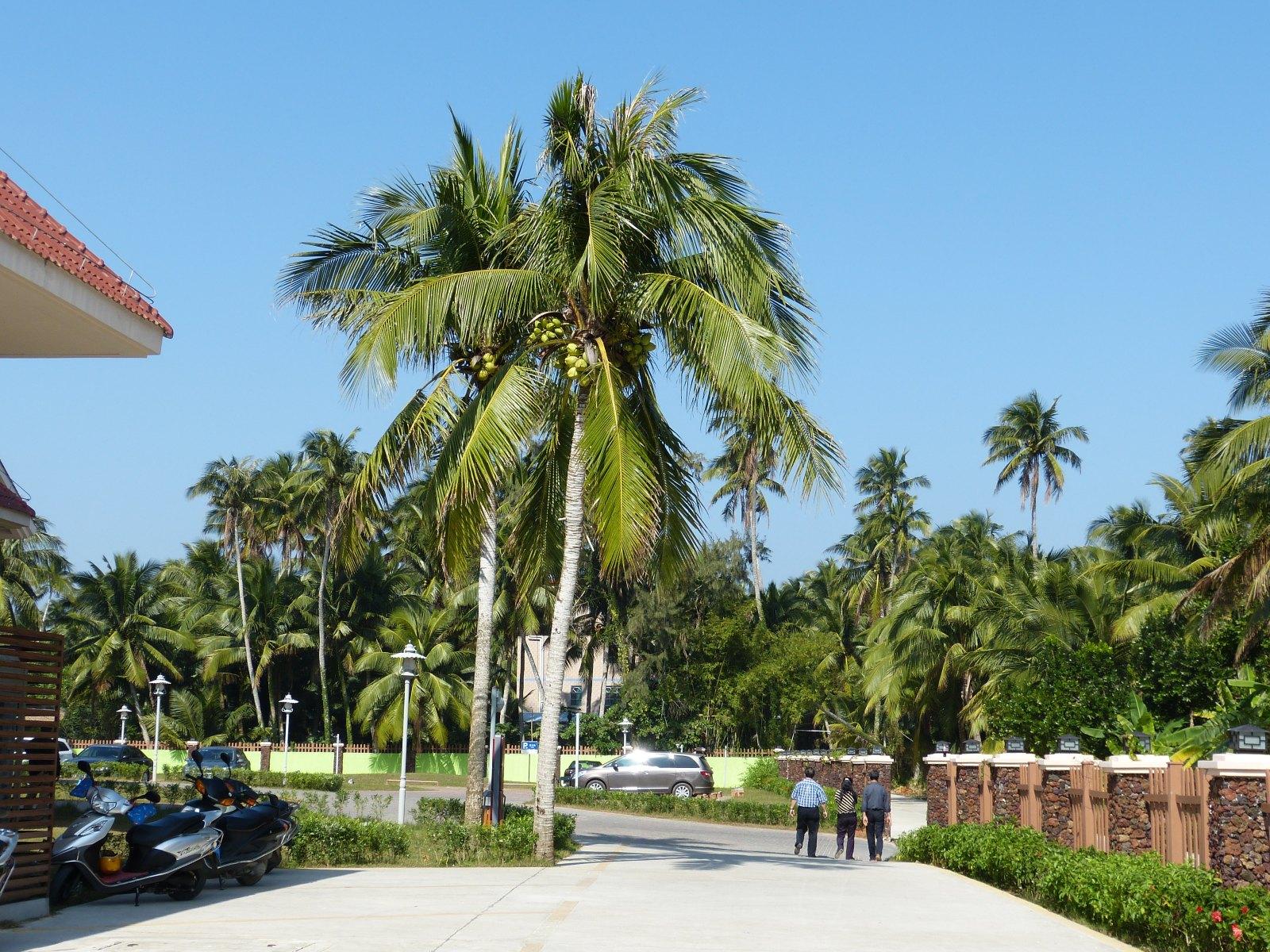 东郊椰林-让你真正享受到椰乡大自然的温馨和甜蜜