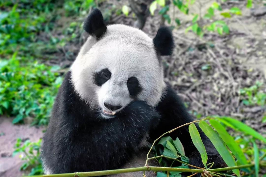 你还在忍受顶着个熊猫眼去逛街吗